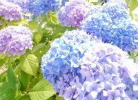梅雨の季節を彩る花
